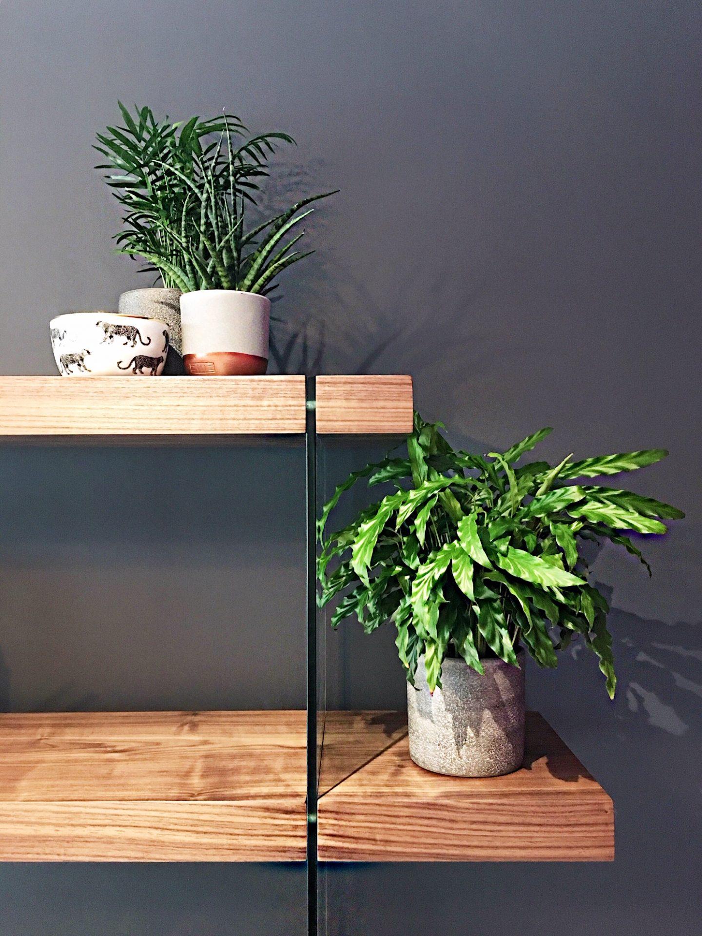 John Lewis Plants